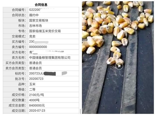 吉林一粮库竞拍玉米有大量虫眼